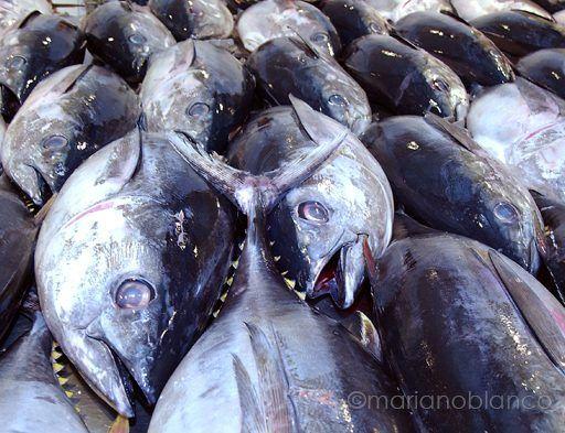 Atunes en lonja