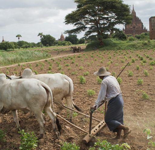 Fotografía Myanmar campesino Bagan
