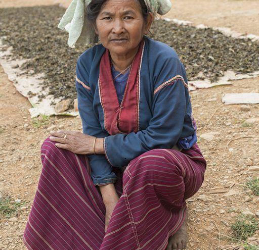 Fotografía Myanmar mujer recolectora de té 3