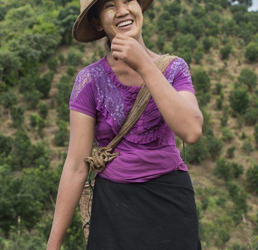 Fotografía Myanmar mujer recolectora de té 2